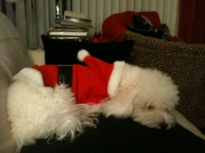 Pooped out Santa Paws