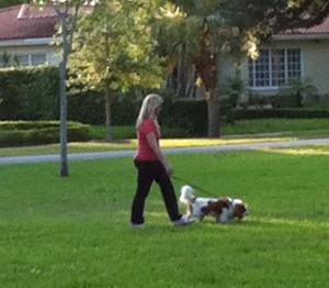 Walk your human