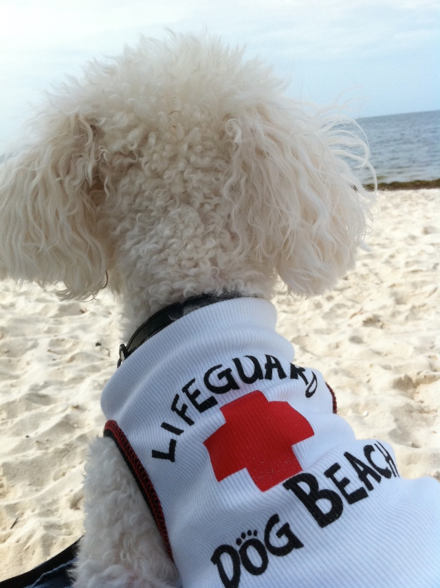 First visit to Dog Beach
