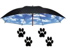 paws with umbrella