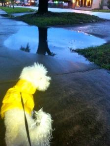 rainy day @TheDante Diaries