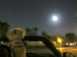 Full Moon Prince