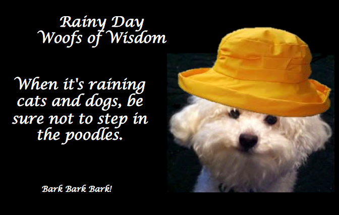 Rainy Day Wisdom