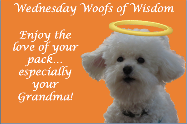 Woofs of Wisdom