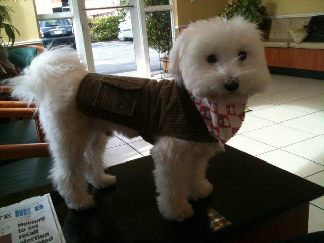 Daddy Dog Rocky