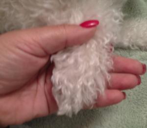 paw & hand