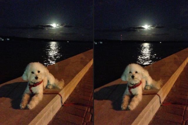 Full Moon Dog