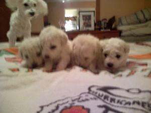 dante-puppies3