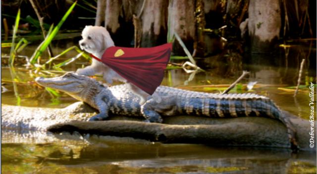 Ride that Gator