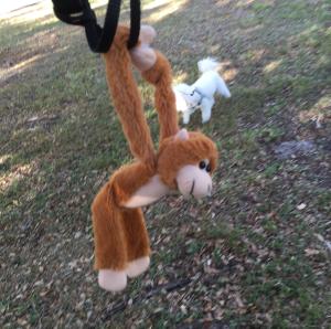 Mini-Monkey