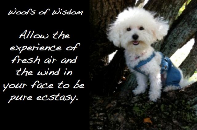 wisdom - experience