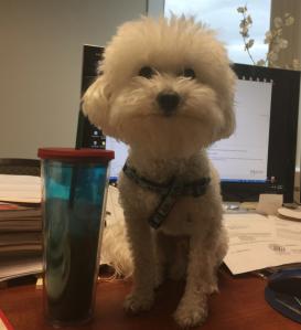 Hard working dog