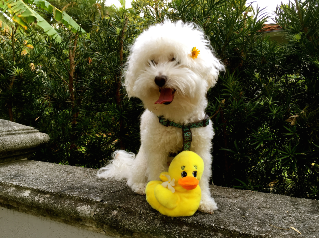 Dante Ducky