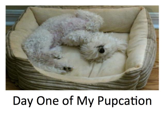 Pupcation