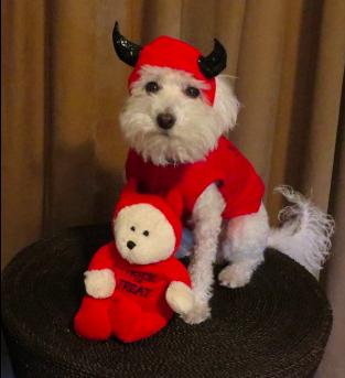 Dante Devil Dog