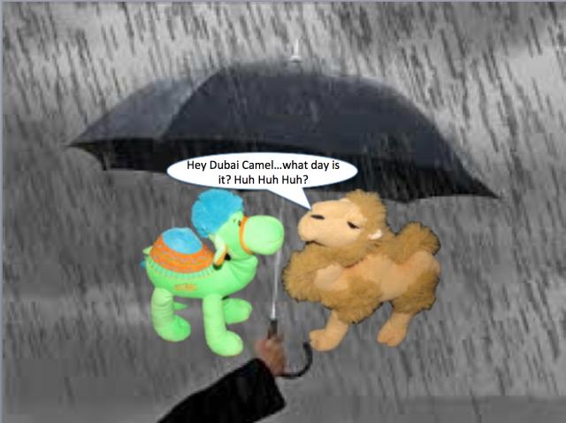Rainy day camels