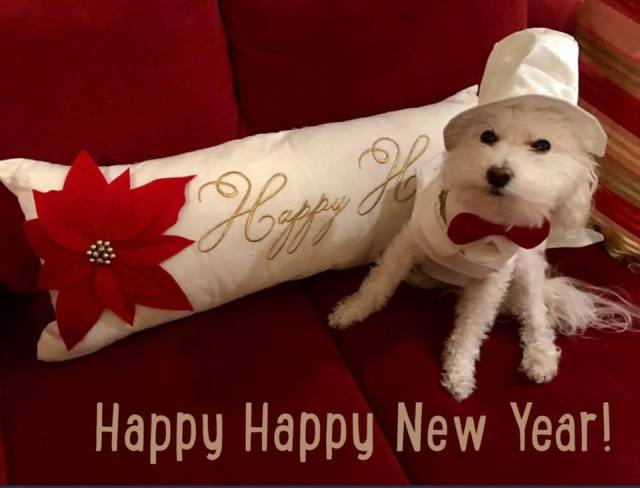 dante-happy-new-year