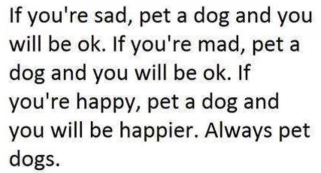 pet a dog